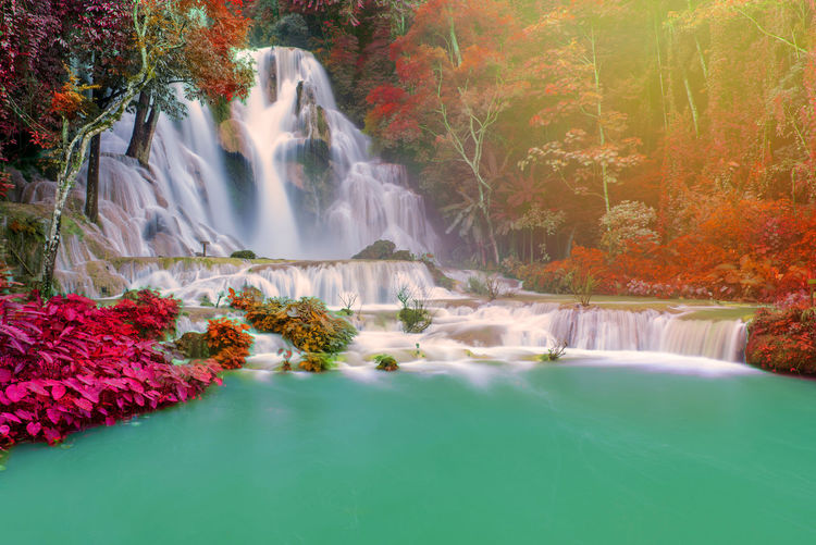 Water Beauty In Nature Plant Motion Tree Waterfall Scenics - Nature Long Exposure Nature Forest Blurred Motion Flowing Water No People Day Waterfront Rock Land Rock - Object Growth Flowing Outdoors Power In Nature Change Rainforest Falling Water