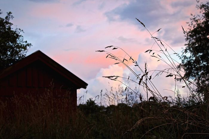 Farmhouse Sunset Sky Low Angle View Plant Growth Built Structure Architecture Nature Silhouette Beauty In Nature Close-up Tranquility Building Exterior Scenics Cloud Cloud - Sky Tranquil Scene Outdoors Growing Sun Forest Focus On Foreground Extreme Close Up Beauty In Nature Tranquility