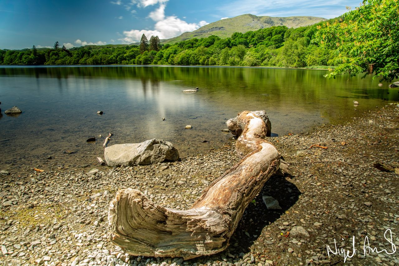 water, lake, tree, tranquility, beauty in nature, nature, plant, tranquil scene, no people, scenics - nature, reflection, day, sky, mountain, non-urban scene, cloud - sky, wood, animal wildlife, animals in the wild, outdoors, driftwood