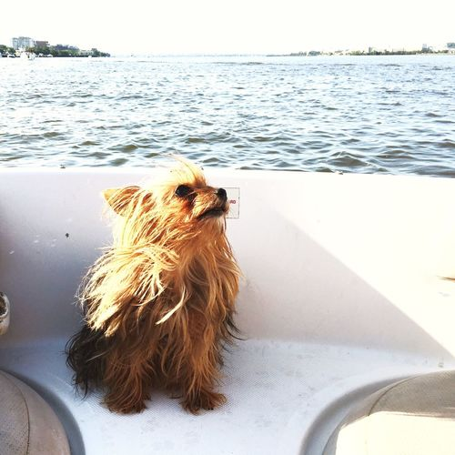 Close-up of dog by sea against sky