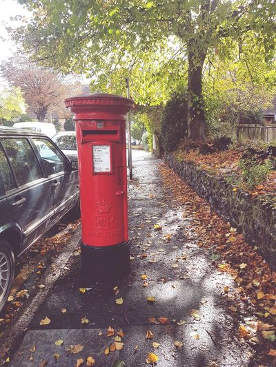 An autumn day in Bromley Tree Outdoors London Life Post Box  Red Post Box Communication No People Day Outdoor Photography Postbox Letterbox Bromley Leaves Autumn Leaves Autumn 2016