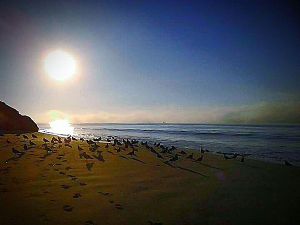 My Photography Sand And Sea Santa Cruz, Ca Pacific Ocean My Point Of View Taking Photos This Week On Eyeem Sand And Beach Sun Beach Photography Nature Cloud - Sky Check This Out Seagulls And Sea Seagulls On The Beach Sunny Day My Favorite Photo Water Tourist Destination Birds Of EyeEm