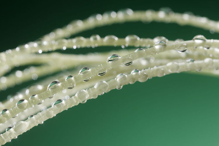 Young sprout with water drops