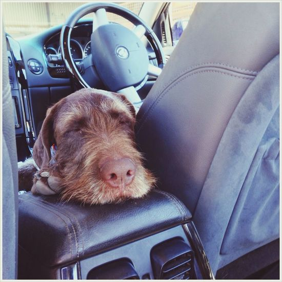 My Otto The Reasons I Lived I Love My Dog❤ German Wirehaired Pointer