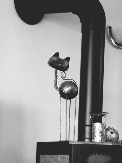 Just For Fun Taking Photos It's A Cats Life Metal Art Blackandwhite