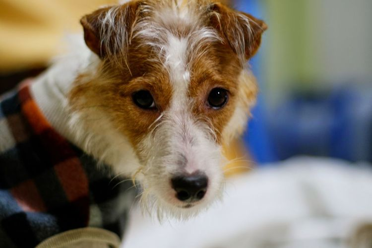 Dog I Love My Dog Jack Russell Dog Portrait Canon EOS 7D Mark II