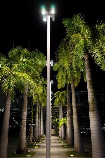 Marina bayの夜