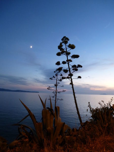 Agave Flower Agave Plant Beauty In Nature Bisevo Island Close-up Dalmatia Dramatic Sky Plant Scenics Sunset_collection Tranquil Scene Tranquility Water Live For The Story