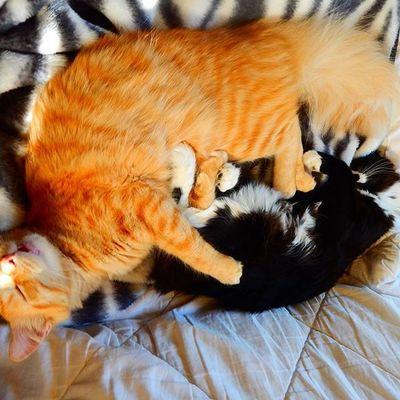 Missphoebe Mrlito Twopeasinapod Tuxedocat Gingercat