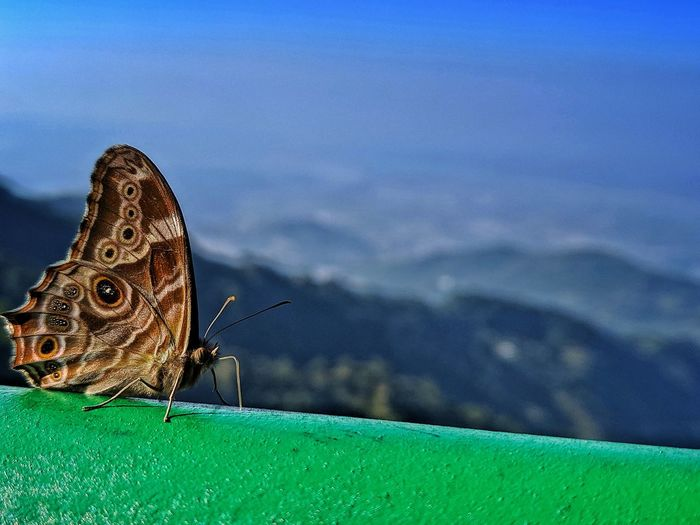 Close-up of butterfly on a mountain