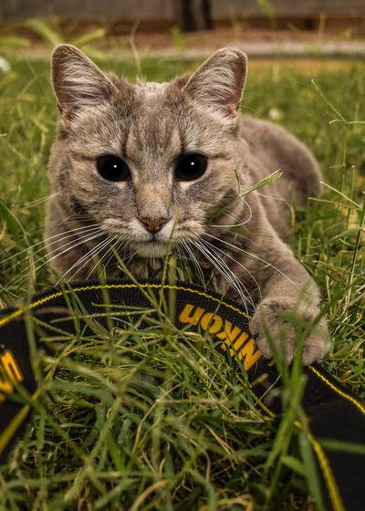 Portrait of rabbit on grassy field