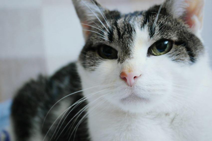 Enjoying Life Open Edit Schlumpelkater Captured Moment Catcontent Cat Catoftheday Cats