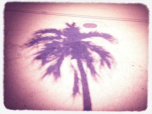 Fl At Miami Beach