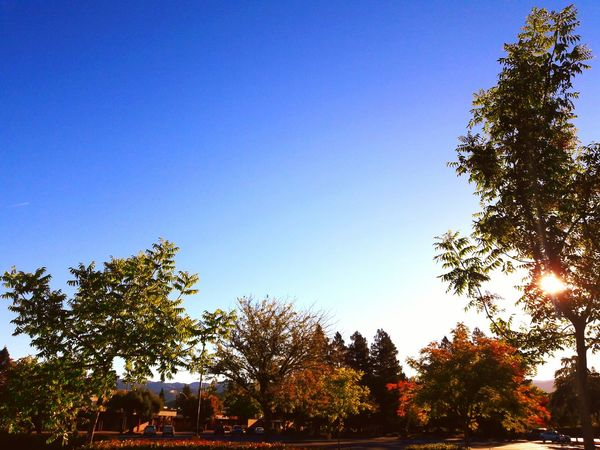 Tree Clear Sky Blue Growth Copy Space Low Angle View Tranquil Scene Tranquility Green Nature Scenics Beauty In Nature Plant Day Branch Outdoors Solitude Lush Foliage Non-urban Scene Green Color