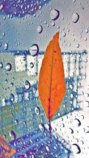 Rain ☺️✌🏻️