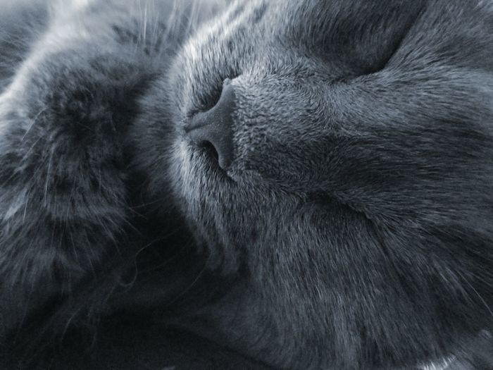 GREY LOVE Fluffy Love Cats Catnaps MUR B&W Fine Art The Art Of Photography The Song Of Light Color Palette Monochrome Photography TCPM Art Is Everywhere
