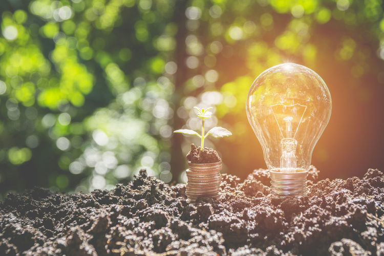 Close-up of light bulb with seedling and coins on mud