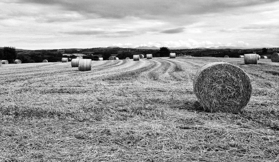 Straw Bales Ireland Northern Ireland Blackandwhite Countryside Country Hanging Out Farm Trees Mourne Mountains Mountains Sky Clouds