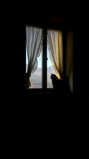 Contemplazione. Window One Animal Curtain Animal Themes Indoors  Cat European Cat Relaxing No People Day Mountains Catlovers Cats Of EyeEm Cat Ears Silhouette Backlight Backlight And Shadows Backlighting Photography Be. Ready. Black And White Friday EyeEm Ready   The Still Life Photographer - 2018 EyeEm Awards