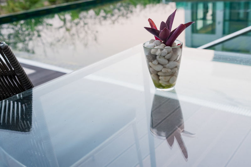 Close-up of potted plant on glass window