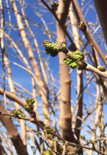 Torna la vida... Catalunyalove Nature