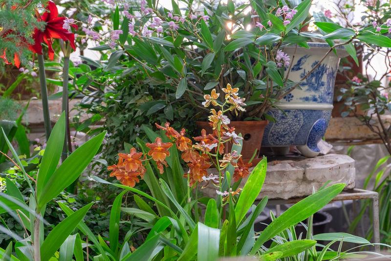 Close-up of orange flowering plants in yard