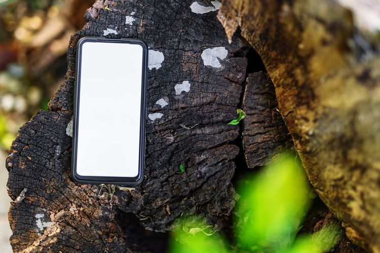 Close-up of mobile phone on tree trunk