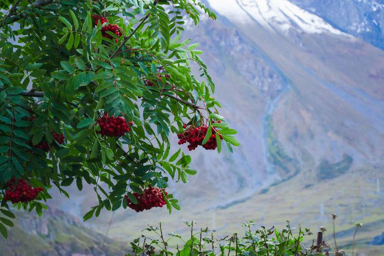 Fruit Beauty In