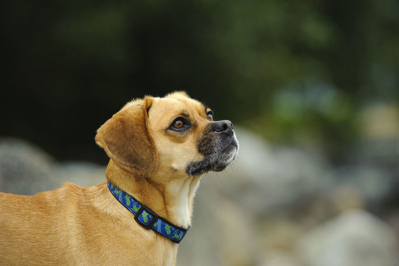 Side view of puggle