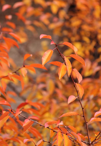 Autumn leaves Dry Leaves November Plant Tree Autumn Beauty In Nature Branch Cherry Leaf Cherry Tree Close-up Color Day Dried Dry Fall Fragility Growth Leaf Nature No People Orange Color Outdoors Season  Twig Vibrant Color
