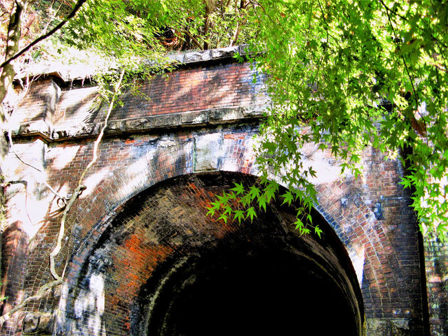 Aged Architecture Brick Bricks Close-up Day Green Color No People Old Outdoors Train Tree Tunnel