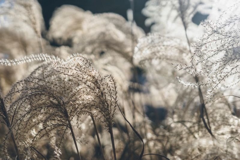 Wild grass Nature Plant Focus On Foreground Close-up No People Nature Growth Beauty In Nature Tranquility Day Selective Focus Outdoors Sunlight Fragility Winter Vulnerability  Flower Cold Temperature