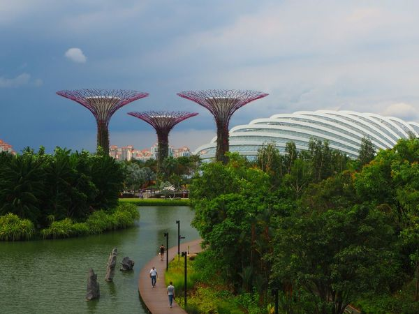 Supertrees and Domes. Gardens by the Bay, Singapore. Crazy weather today though. It rained really heavily a few moments after we entered the dome. Super Trees Super Tree Grove Showcase July Gardens By The Bay Garden Photography EyeEm Best Shots Singapore Glass Dome Flowerdome EyeEm Nature Lover Gardens By The Bay Singapore Landscape EyeEm Best Shots - Landscape Singapore Landscape Gradens By The Bay Landscape Colour Of Life
