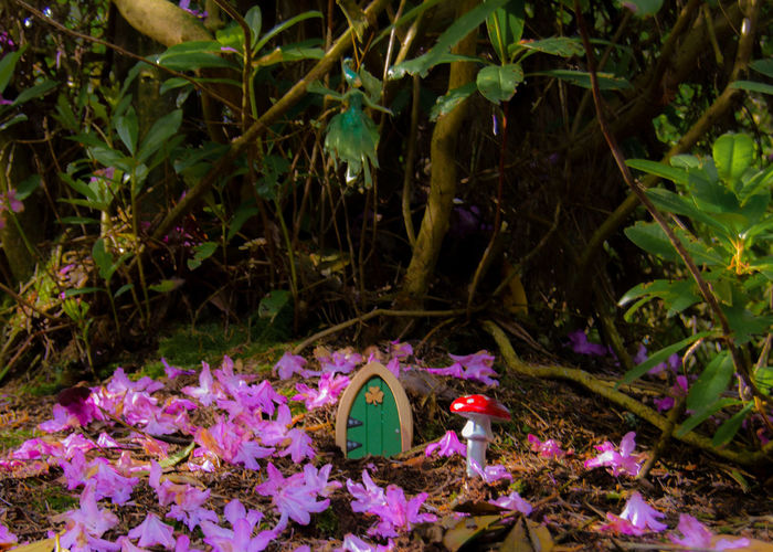 18-55mm Beauty In Nature Blooming Blossom Botany Clare Glens Fairy Fairy Door Fairytales & Dreams Flower Growth Home In Bloom Ireland Nature Nikon D3200 Outdoors Pink Color Purple Tranquility Enchanted