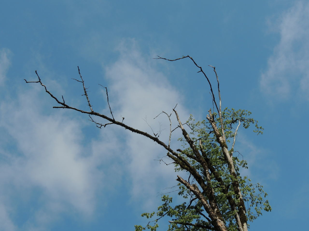 sky, low angle view, tree, day, branch, cloud - sky, no people, nature, outdoors, growth, blue, beauty in nature, bare tree
