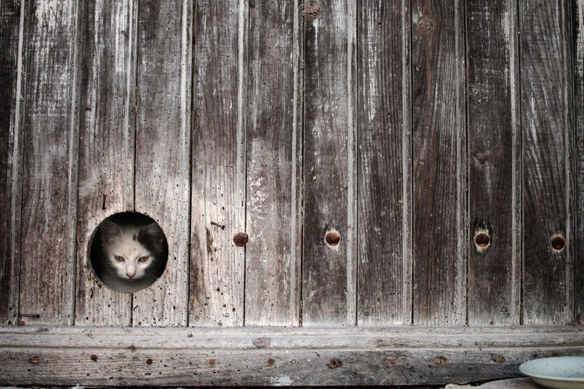 Backgrounds Cat Cute Detail Dirty Door Focus On Foreground France France Streets Kitten Old Old-fashioned Pet Pets Plank Rusty Textured  Textures And Surfaces Travel Weathered Wood Wood - Material Wooden Woods