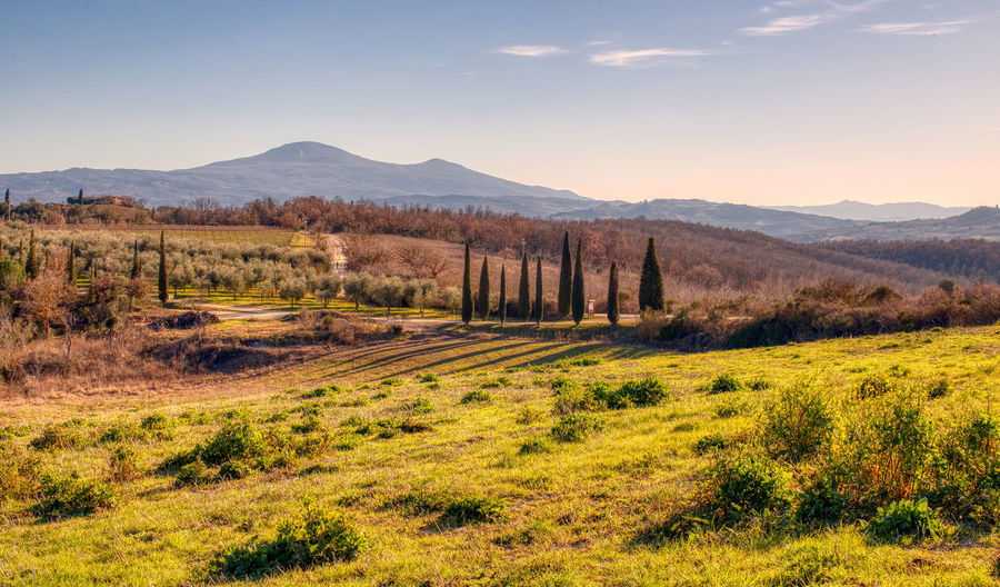 Val D 'Orcia Cypress Trees  Mountains Background Grass Sky Mountain Scenics - Nature No People Tranquil Scene Landscape Tuscany Day Outdoors Non-urban Scene Land Remote Tree Mountain Range
