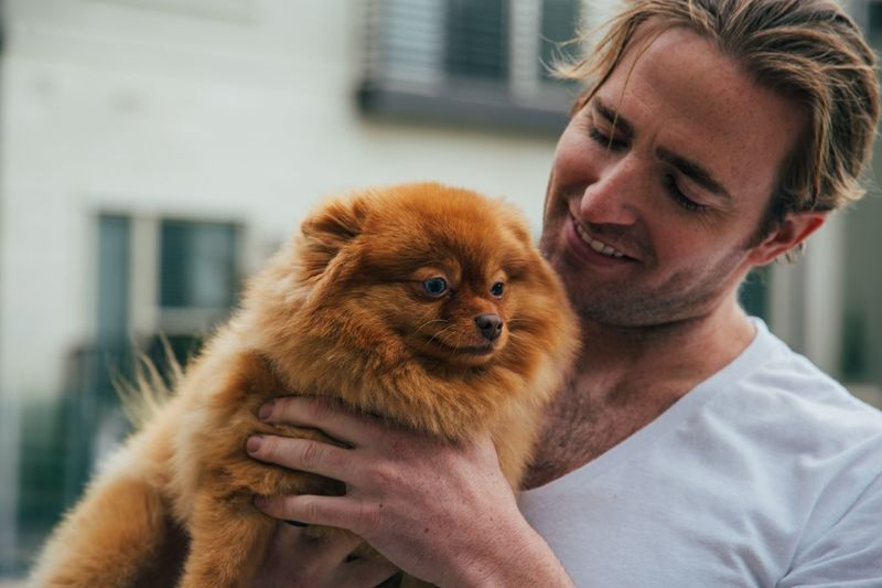 man holding a Pomeranian Hairstyle Positive Emotion Love Adoption A New Beginning Men Care Smiling Pet Owner Lifestyles Pets Holding Real People One Person One Animal EyeEm Selects Hair Fur Pomeranian Blue Eyes Fluffy Portrait Masculinity Handsome 50 Ways Of Seeing: Gratitude Moments Of Happiness