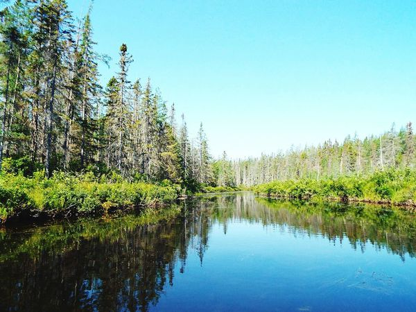 Nature Algonquin Park Algonquinprovincialpark Green River