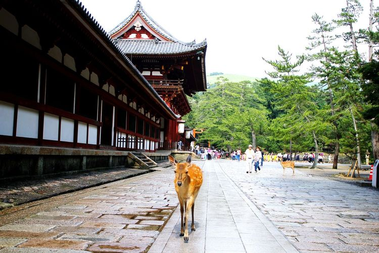 EyeEmBestPics Temple Japan Nara Daim Eye4photography