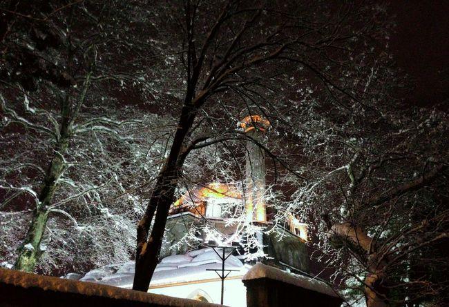 Izmit Merkez Nature Winter Snow Night Turkey Kocaeli Musque Trees
