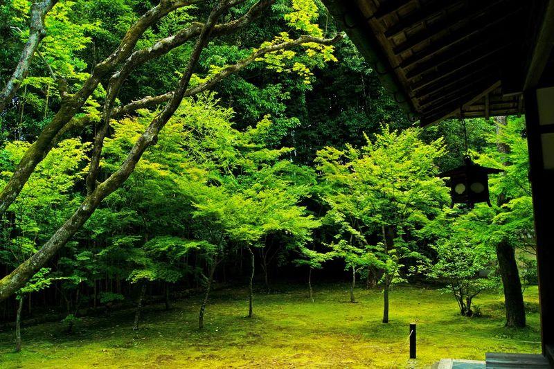 Taking Photos Hello World Relaxing Enjoying Life Photo Around You EyeEm Best Shots 京都市  Traveling 禅 Green