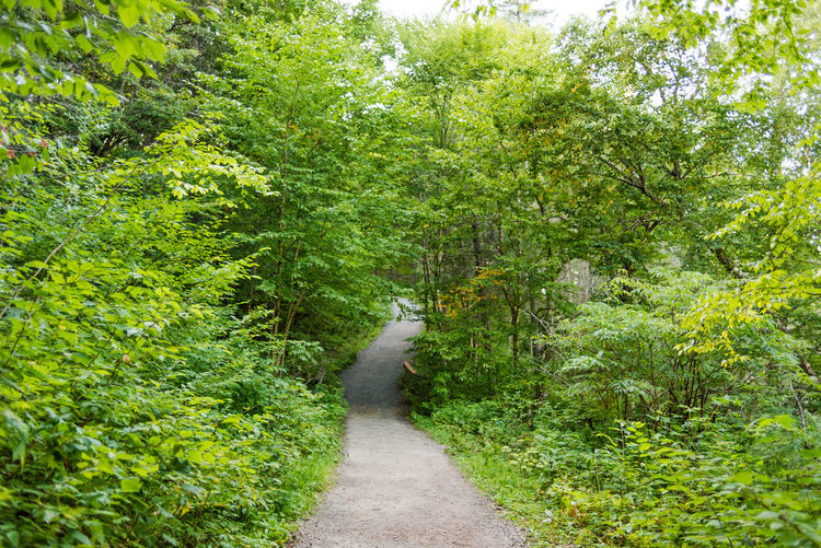 Forest Walk Nature Nature Photography Relaxing Forest Greenary Jungle Outdoors Parc Jacques Cartier Quebec, Canada Trekking Path