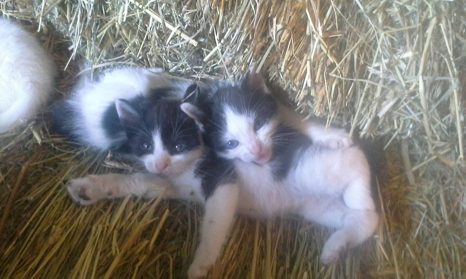 The new additions Barn Cats