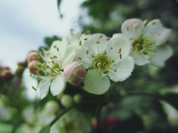 весна цветы Весение цветы Flowers Природа природароссии красиво