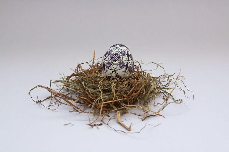 Close-up of bird nest against white background
