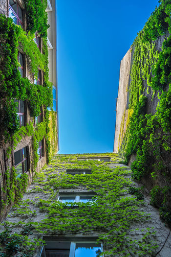 Berlin Backyard - Green growing walls in a backyard in Berlin, Germany - near Hackescher Markt. Architecture Blue Building Building Exterior Built Structure Clear Sky Day Green Color Growth House Lookingup Nature No People Outdoors Plant Residential District Sky Sunlight Tree Wall - Building Feature Window