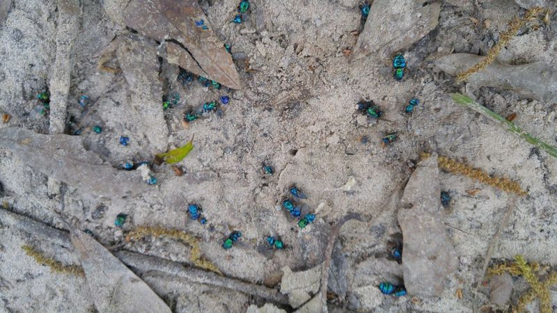 Insects Beautiful Nature Multi Colored Outdoors Sand Nature Close-up Textured  No People Enjoying The Day 💛 Pattern