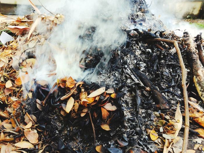 Woods Burning White Smoke Mobile Photography