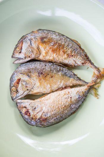 fish Food Food